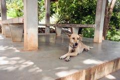 Pies odpoczywa w cieniu, stawia łapę Zdjęcie Royalty Free