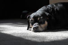 Pies odpoczywa w punkcie światło słoneczne Zdjęcie Stock