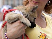 pies orfan przyjmuje obraz stock