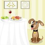 Pies patrzeje dla jedzenia Obraz Stock