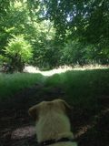 Pies patrzeje dla niektóre deers Obraz Stock