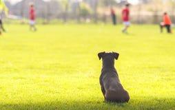 Pies patrzeje dzieci Fotografia Stock