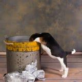 Pies patrzeje w pojemnik na śmiecie Obraz Stock