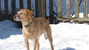 Pies patrzeje w wiatr Obrazy Royalty Free