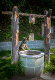 Pies patrzeje w wodnego well Fotografia Stock