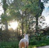 Pies patrzeje zmierzch obrazy royalty free
