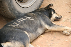 Pies śpi na zmielonym (Bhutan) obrazy stock