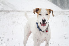 Pies pod śniegiem obraz stock