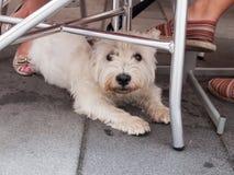Pies pod stołem Fotografia Royalty Free