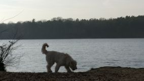 Pies przed morzem zdjęcie royalty free