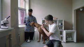 Pies przy ankietą w weterynaryjnej klinice zdjęcie wideo