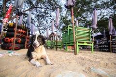 Pies przy beach-2 Obrazy Stock