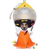 Pies przy groomer lub fryzjerami Zdjęcia Royalty Free