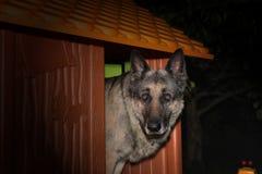 Pies przy noc obrazy stock