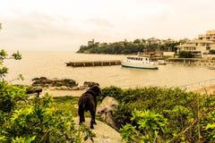 Pies przy plażą obrazy royalty free