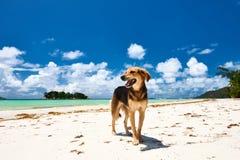 Pies przy plażą fotografia royalty free