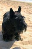 Pies przy plażą Zdjęcia Stock