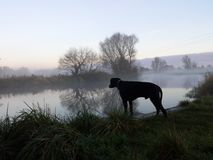 Pies przy rzeką obrazy stock