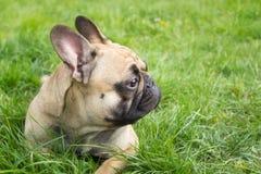 Pies przy trawy tłem Zdjęcie Stock
