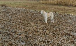 Pies przy zimą obraz royalty free