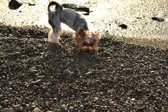 Pies przy zmierzchem po burzy patrzeje dla jedzenia Zdjęcie Royalty Free