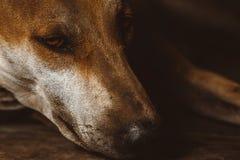 pies przybłęda Zdjęcia Royalty Free