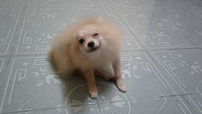 Pies zdjęcia royalty free