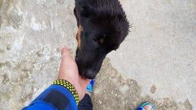 pies psia miłość dwa obraz stock