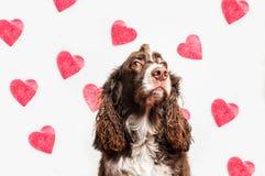pies psia miłość dwa Zdjęcie Royalty Free