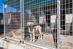 Pies psiarnie Czeka właścicieli zwierzęta Obrazy Stock