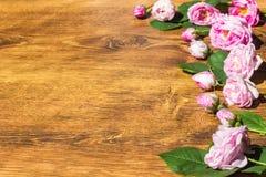 Pies róży menchia Rosa Canina Kwitnie walentynka temat Zdjęcia Stock