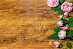 Pies róży menchia Rosa Canina Kwitnie walentynka temat Fotografia Stock