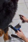 Pies, ręki z cwaniaka muśnięciem zdjęcia stock