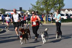 Pies rasa przy Fargo psa rasą zdjęcia royalty free