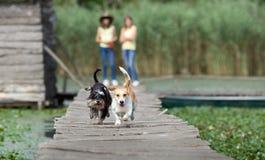 Pies rasa w naturze Obraz Stock