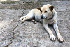 Pies relaksuje na cementowej podłoga Fotografia Stock