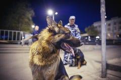 Pies Rosyjska policja zdjęcia royalty free