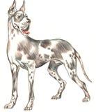 pies rysująca ręka Zdjęcie Royalty Free
