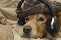 Pies słucha muzyka na telefonie komórkowym podczas gdy kłamający na leżance zdjęcia royalty free