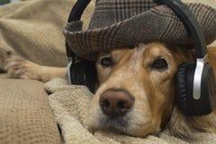 Pies słucha muzyka na telefonie komórkowym podczas gdy kłamający na leżance fotografia royalty free