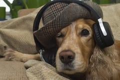 Pies słucha muzyka na telefonie komórkowym podczas gdy kłamający na leżance zdjęcie stock