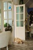 pies się odprężyć Obraz Royalty Free