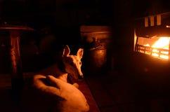 pies się odprężyć Zdjęcie Stock