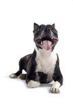 pies się uśmiecha Obrazy Stock
