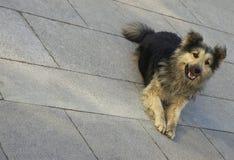 pies się uśmiecha Obraz Royalty Free