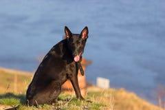 Pies siedzi na koszcie Fotografia Stock