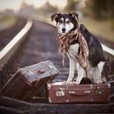 Pies siedzi na walizce na poręczach Fotografia Stock