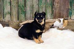 Pies siedzi przy ogrodzeniem w śniegu Zdjęcie Royalty Free