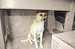 Pies, strach strach nieznane pod stołem, smucenie, pies w garażu Obraz Royalty Free