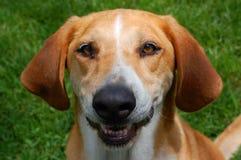 pies szczęśliwy Obrazy Stock